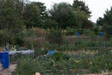Nouvelles mobilisations pour les jardins familiaux à la rentrée