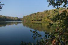 L'ONF vient présenter la forêt de Versailles
