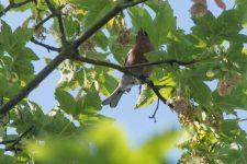 À la découverte des oiseaux ignymontains