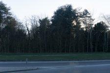 La pépinière bientôt transformée en parc forestier valorisé