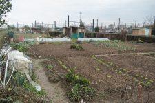 Trucs et astuces pour réussir son jardin