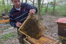 Une confrérie de chevaliers dévouée aux abeilles