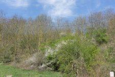 JO 2024: sept projets en lice pour aménager la colline d'Élancourt