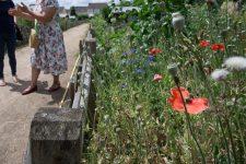 Les Villepreusiens vont pouvoir fleurir les espaces publics