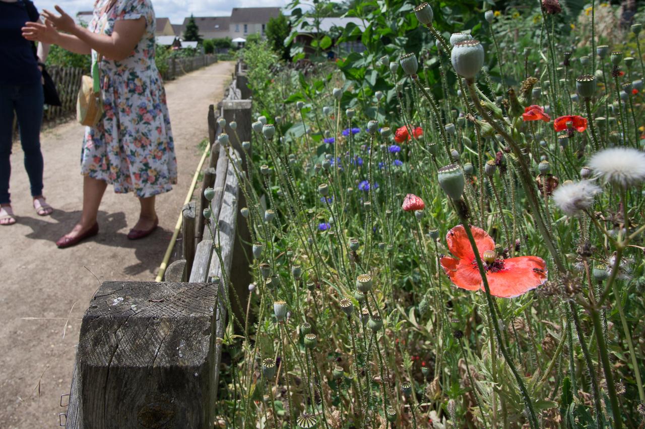 Planter Des Coquelicots Dans Son Jardin villepreux - les villepreusiens vont pouvoir fleurir les