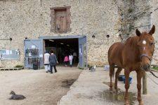 Des cours d'équitation pour rétablir le lien entre le parent et son enfant