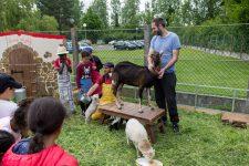 La ferme pédagogique Tiligolo fait son show