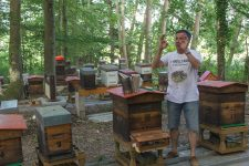Une étude scientifique pour définir les causes de mortalité chez les abeilles