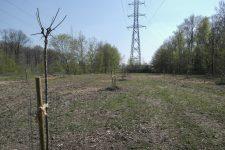 3 000 arbres en plus pour la forêt de Sainte-Apolline