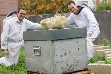 À côté de la mairie, les ruches ont repris vie