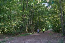 Les forêts yvelinoises sont à nouveau ouvertes