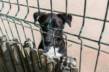 La SPA a lancé des adoptions dématérialisées pendant le confinement