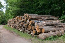 Les coupes en forêt de Versailles inquiètent l'association locale