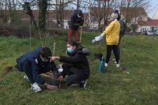 Les lycéens de Delaunay plantent des arbres dans l'établissement