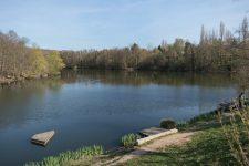La restauration écologique de l'étang du bois de la Cranne a débuté