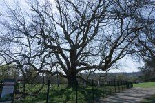 Des balades naturalistes bientôt organisées au parc de Diane
